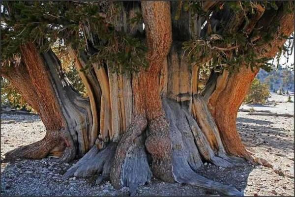 treetogether